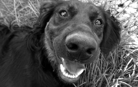 Co opowiesz o swoim szefie za kilkadziesiąt lat na spacerze z psem? Co o tobie opowiadają na spacerach z psem?